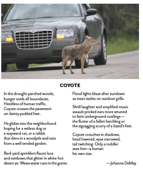 coyote poem